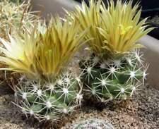 Escobaria missouriensis v caespitosa,seeds10 pcs
