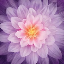 Dream Big Flower- Orchid - Hoffman Fabrics-Digital Print