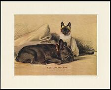FRENCH BULLDOG AND SIAMESE CAT CHARMING DOG PRINT MOUNTED READY TO FRAME