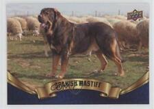 2018 Upper Deck Canine Collection Blue Spanish Mastiff #229 0n8