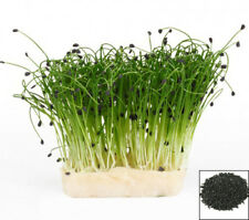 Sprouting seeds - CHIVE - Sprouts 10 GRAMS / 0.3 oz #1042