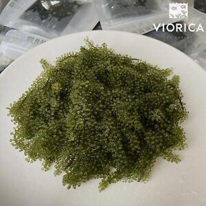 Sea Grapes Dehydrated Sea Grape Lato Healthy Food 100g , UK Seller Summer Sale