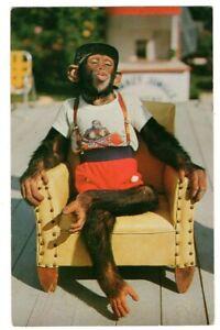 082420 VINTAGE MONKEY JUNGLE MIAMI FL POSTCARD DRESSED CHIMPANZEE ON CHAIR