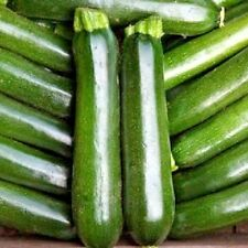 Vegetable Courgette F1 Midnight 10 seeds Zucchini