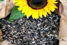 Sonnenblumenkerne gestreift 25kg Neue Ernte 21 Vogelfutter Ganzjahresvogelfutter