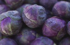 Seeds Brussels Sprouts Rosella Vegetable Organic Heirloom Russian Ukraine