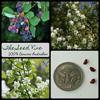 10+ SASKATOON SERVICEBERRY SEEDS (Amelanchier alnifolia) Canadian Edible Berry