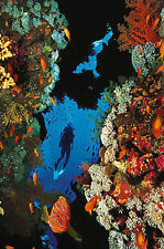SCUBA DIVING Through Beautiful Coral Reef Watersports POSTER