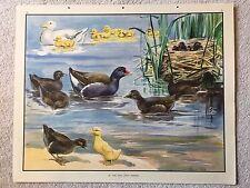 Eileen Soper Enid Blyton 1950s Original School Print No.34 Two Little Friends