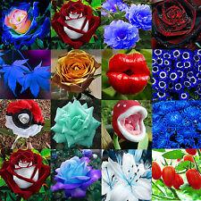 Best Variety Spring & Summer Flower Perennial Garden Plant Bulbs Rare Seeds New