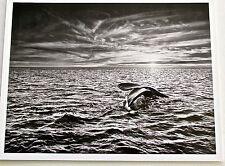 Sebastiao Salgado Tail of Giant Whale by Valdes Peninsula 13x10 Offset Litho
