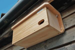 Swift Box Camera |  Garden Quality Wooden Hanging Nesting Small Wild Birds Wired