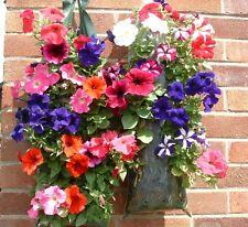Hanging Strawberry Petunia Planter for Hanging SETbags for Flowers Plants Herb12