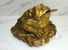 Feng Shui - Medium Brass Money Frog / 3 Legged Toad Biting Coin