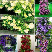 100Pcs Clematis Climbing Vine Seeds Flower Plant Home Garden Ornament Decor Nice
