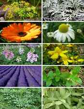 Kit seeds Magical Plant WICCA WITCH-Rue Sage St. John's wort Lavender Marigold