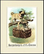 PUG CUTE LITTLE DOGS ON COCOA ADVERT LOVELY DOG PRINT MOUNTED READY TO FRAME