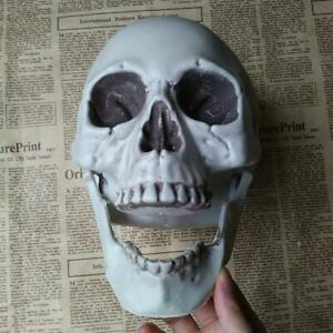 Human Skull Decors Prop Skeleton Plastic Head Halloween Coffee Decoration C6E5.