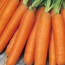 Zanahoria-temprano Nantes - 100 semillas-liveseeds -