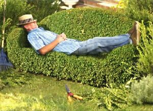 Avanti Press Man on Topiary Couch Father's Day Card