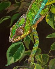 "Chameleon portrait, Original artwork oil painting, reptile 16''x20"""