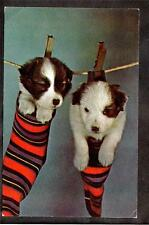 c.1960 vintage chrome puppies on clothes line dog postcard
