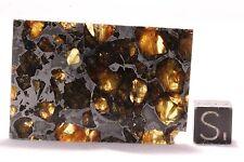 Brahin meteorite pallasite Part slice 19.4 grams
