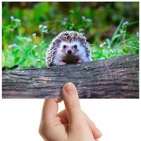 "Cheeky Hedgehog Garden Animal Small Photograph 6""x4"" Art Print Photo Gift #14322"