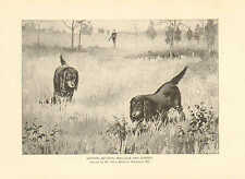 Dogs, Gordon Setters, Owner, Harry Malcolm, Baltimore, Md. 1891 Antique Print,