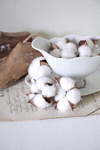 (0,80€/St) 5 Baumwollkapseln Früchte Baumwollblüten Herbst weiß naturdeko Deko
