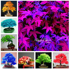 30 Pcs Seeds Japanese Maple Tree Garden Color Mix Mini Bonsai Flower Plants 2019
