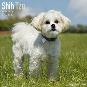 Shih Tzu Dog - 2022 Square Wall Calendar