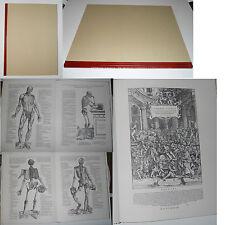 VESALIO Epitome Maestri  anatomical tables tavole anatomiche anatomische Tabell
