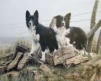 Steven Townsend TIP AND PIP Border Collies Sheep Dogs