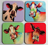 Set of four colourful COW coasters by artist Maria Moss