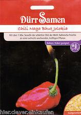Severamente peperoncino del mondo Naga Bhut Jolokia oltre 1 milioni di faccia Dürr semi