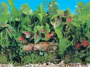 "15"" TALL Butterfly Waterproof Aquarium / Vivarium Background Poster Picture"