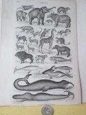Vitnage Print,Giraffe+Whales,Mamm als,Goldsmith,1859,Black+W hite,Plate 55