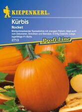 Kiepenkerl - Kürbis * Rocket * 2713 wohlschmeckender Speisekürbis lagerfähig
