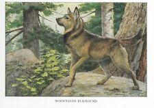 Norwegian Elkhound - 1927 Color Dog Art Print - Matted