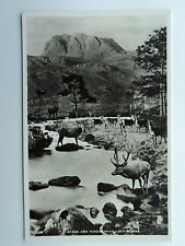 J B White Vintage B&W RP PC Stags and Hinds Near Loch Maree. Ross & Cromarty.