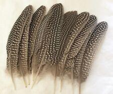 10 Guinea bird feathers - 3