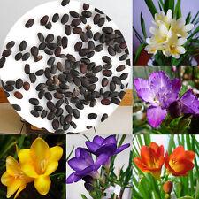 100Pc/Pack Freesia Bulbs Old Fashion Perfume Flower Seeds Garden Plant Perennial