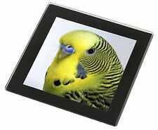 Yellow Budgerigar, Budgie Black Rim Glass Coaster Animal Breed Gift, AB-51GC