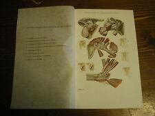 Planches/gravures science médecine Articulations de l'épaule/ coude   an 1920