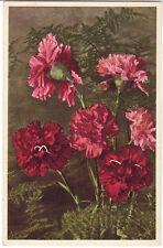 CPSM - FLEUR - Flower - Oeillet - Garden-Pink - Garten-Nelke - Garofano.