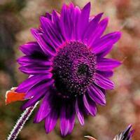 20Pcs Mix Dahlia flower seeds Great Bonsai Plant Perennial Stunning bloom n M9A2