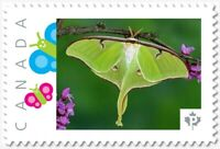 BUTTERFLY = MOTH LUNA = Picture Postage stamp MNH-VF Canada 2019 [p19-02sn11]