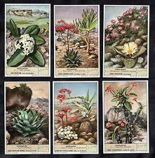 Succulent Plants & Cacti Cards Set 1954 Liebig Aloe Agave Desert Crassula Hoya