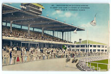 1950s Greyhound Racing in Florida postcard; St. Petersburg Kennel Club dog track